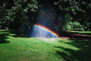 Beim Rasen sprengen im Sommer entsteht durch die Wassertropfen und die Sonneneinstrahlung ein Regenbogen über dem Rasensprenger, der auf sattgrünem Rasen steht.