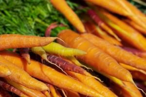 Wintergemüse anbauen: Karotten