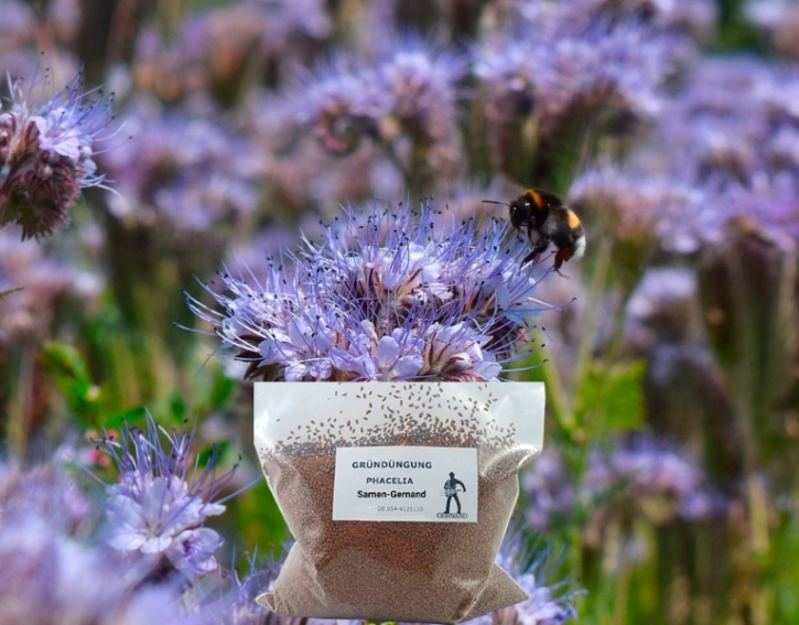 Phacelia Bienenfreund Frische Saat Mantelsaat® 2 kg Samen