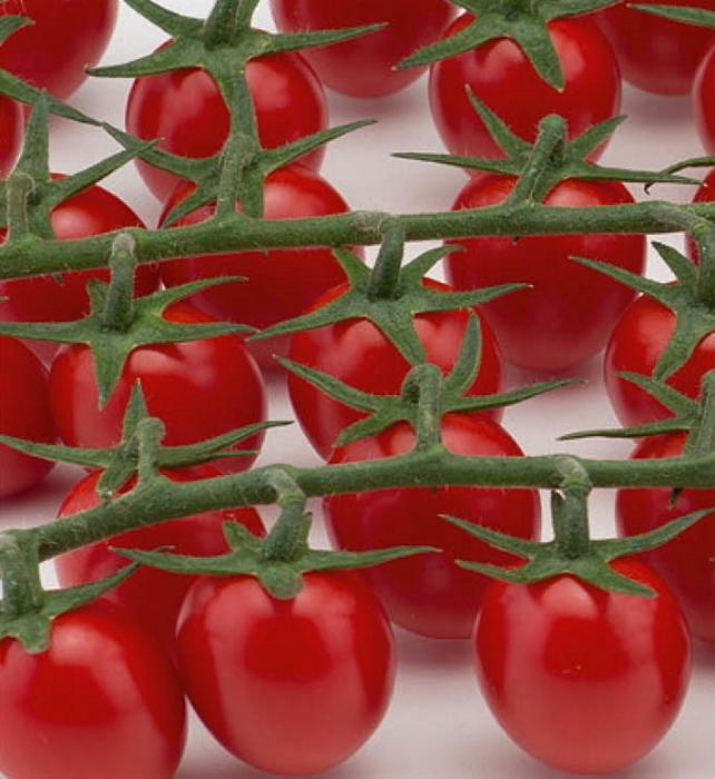 Tomaten Snack-Datteltomaten Fortunato F1