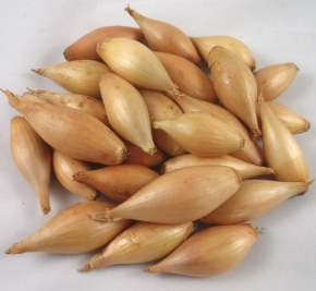 Birnförmige Steckzwiebeln 750 g