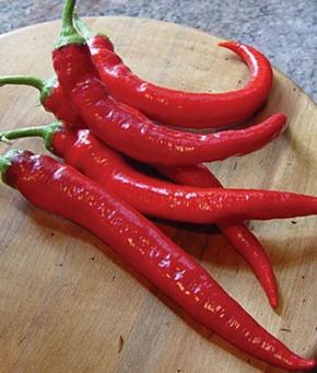 Chili Rote Teufele