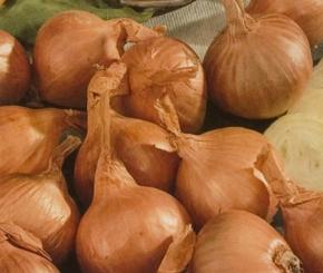 Pflanzschalotten Golden Gourmet 750 g