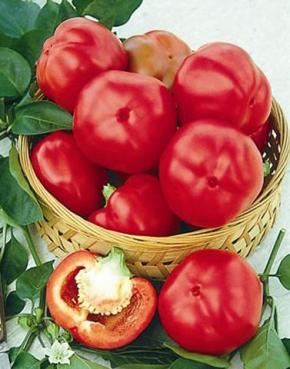 Paprika Tomatenpaprika Topgirl