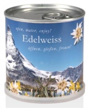 Samen in Dosen - Edelweiss