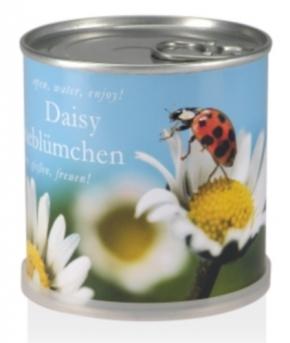 Samen in Dosen - Gänseblümchen Daisy