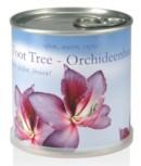 Samen in Dosen - Orchid Tree  Orchideenbaum