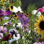 Sommerblumen Blütenmeer niedrige Mischung