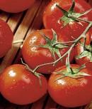 Tomaten Hellfrucht Samen keine Hybride!