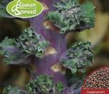 Flower Sprout Autumn Star