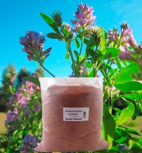 Luzerne (Ewiger Klee) Frische Saat 10 kg