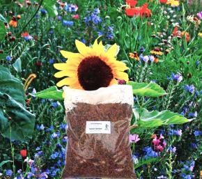 Blühmischung Einjährig 500 g Frische Saat für ca. 250 m²