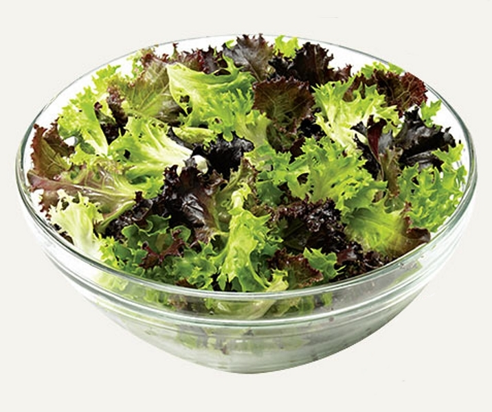 Balkon Salat Eazyleaf Mischung