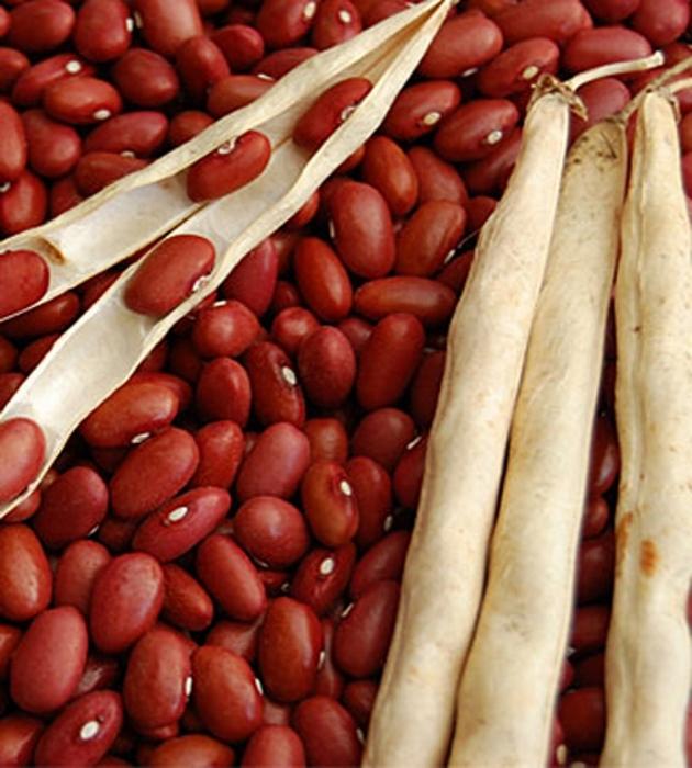 Buschbohnen Trockenkochbohne Red Kidney