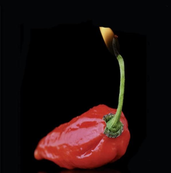 Chili Naga Bhut Jolokia