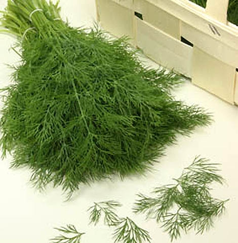 Dill Goldkrone Tetra-Dill 5 g Züchtersaat für 10 m²