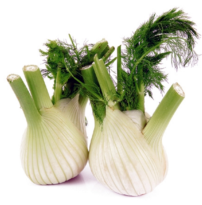 Fenchel Knollen Fenchel Orion