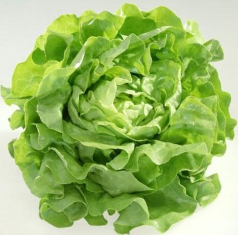 Bio Salat Kopfsalat Analena