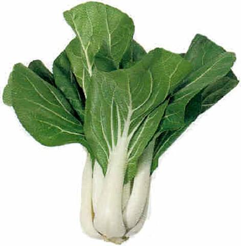 Kohl Asia Salat Pak Choi