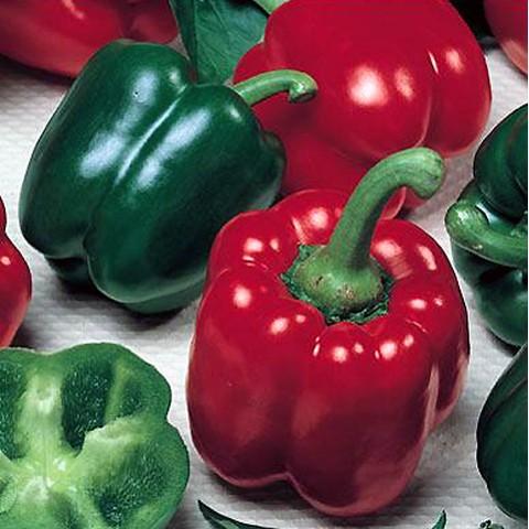 Paprika Gemüse Paprika California Yolo Wonder mild