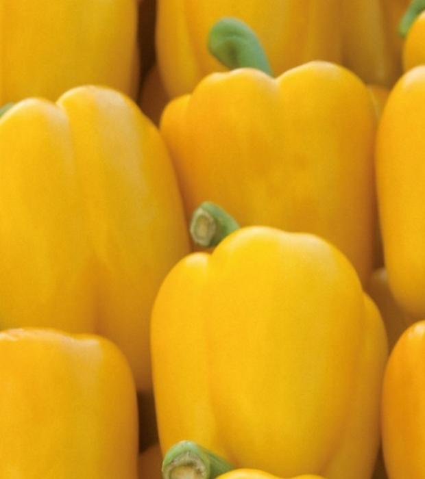 Paprika Gelbe Pusztagold milde Sorte
