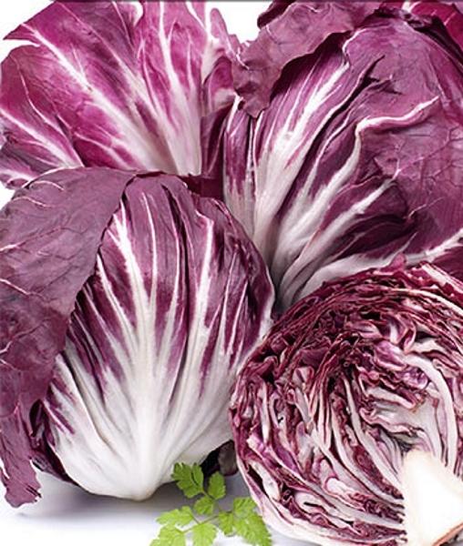 Salat Zichoriensalat Radicchio Palla Rossa