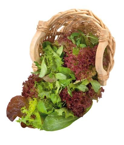 Schnittsalat Misticanza italienische Salatmischung