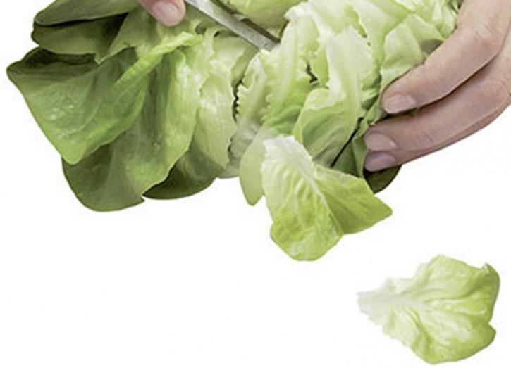 Schnittsalat Salanova Salat Descartes RZ