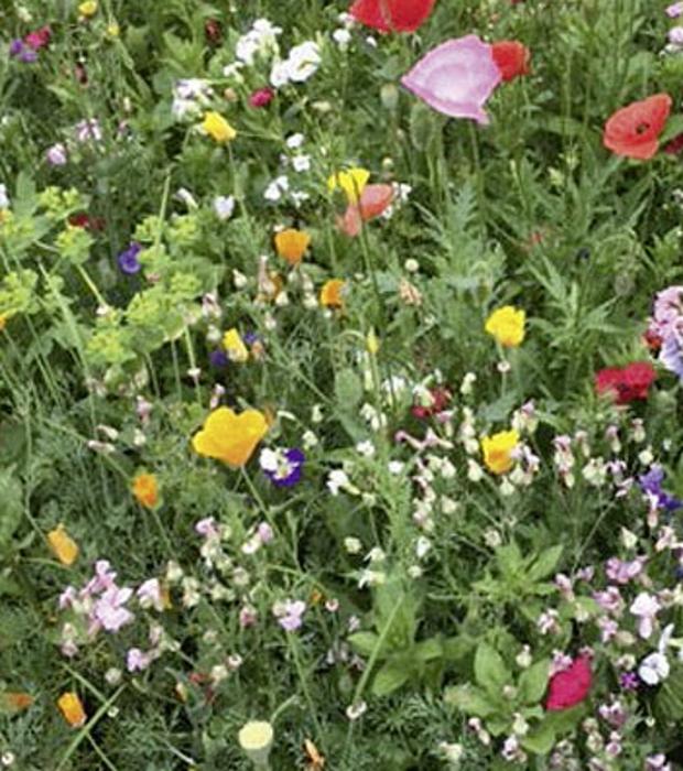 Sommerblumen Bio Mischung Blühender Naturgarten