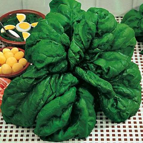 Spinat Yabi 50 g Züchtersaat für ca. 5 m²