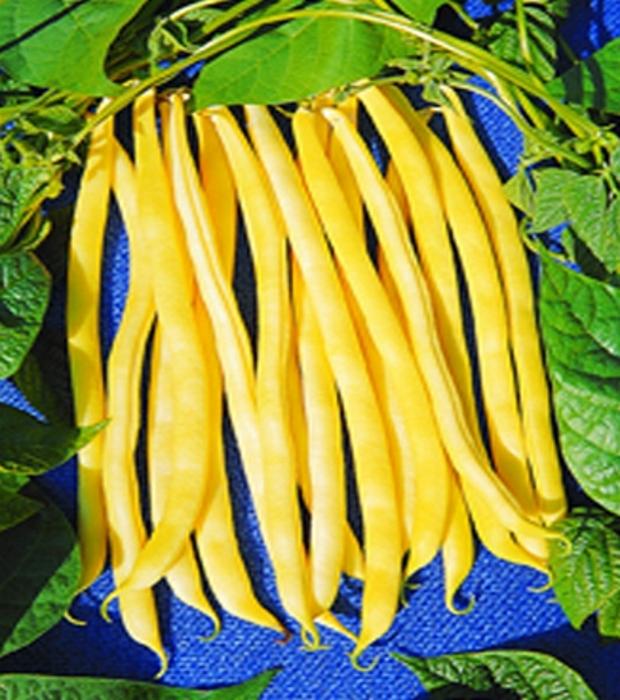 Stangenbohnen Neckargold Gelbe