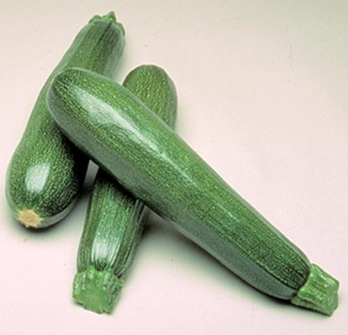 Zucchini Parthenon Profisorte