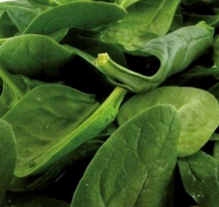 Spinat 2 kg frische Saat Gründünger für 180 m²