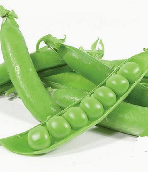 Erbsen Markerbse Maxigolt Züchtersaat 1 kg Samen