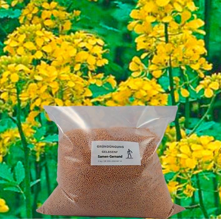 Gelbsenf Gründüngung 2 kg frische Saat