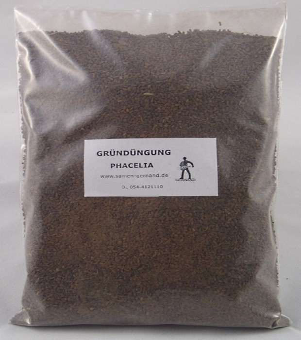 Phacelia Bienenfreund Gründüngung Frische Saat 2 kg