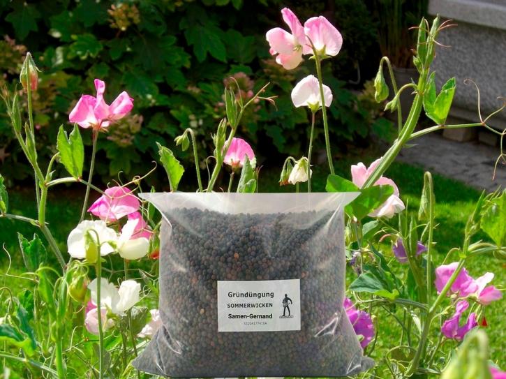 Wicken Sommerwicken 25 kg frische Saat