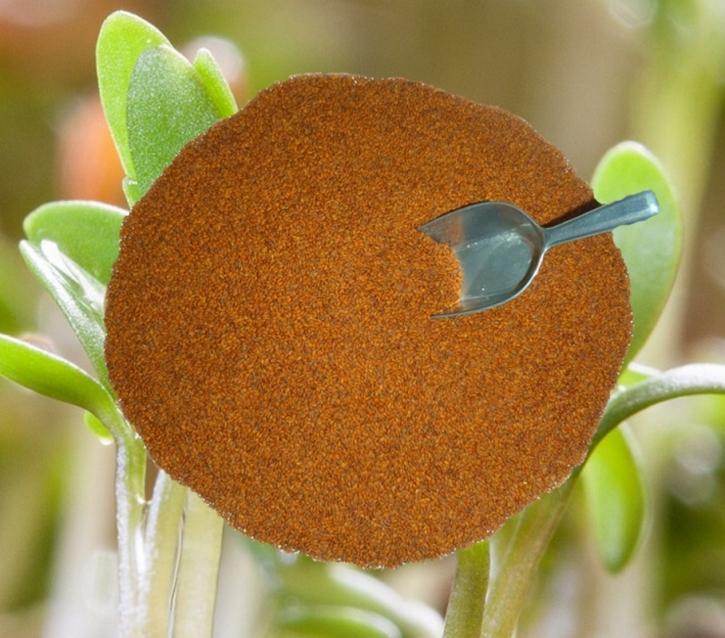 Kresse Gartenkresse 1kg Einfache frische, reine Ware