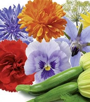 Blumen Essbare BIO Blumen Mischung einjährig für Balkon