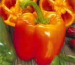 Paprika Gemüsepaprika Gourmet orange