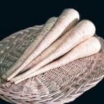 Pastinaken Javelin lange Pastinake