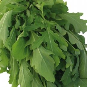 Rauke Salatrauke Rucola 5 g Züchtersaat für 10 m²