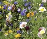 Sommerblumen Schattenblumen Mischung
