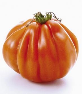 Tomaten Fleischtomate Ochsenherz Borsalina