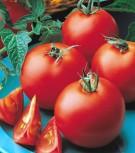 Tomaten Matina sehr früh